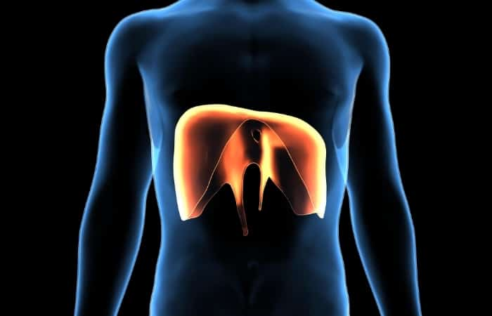 Breathing Technique - : The diaphragm is an involuntary muscle. We cannot directly control the diaphragm's movements; we can only influence how it rises and falls with the correct posture and muscle engagement.